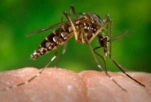 Casos de dengue e zika