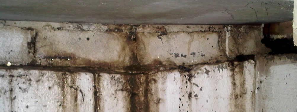 Ddtização baratas de baratas no Rio e Grande Rio