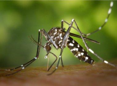 Rio de Janeiro lança nova força-tarefa contra Aedes aegypti
