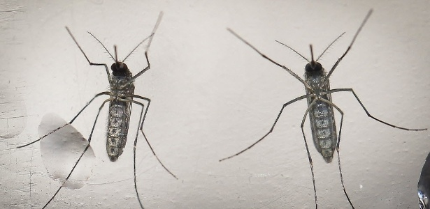 Anunciado o sequenciamento completo do genoma do vírus zika