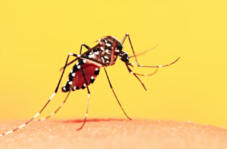 Febre Amarela – Saiba Como se Proteger Dessa Doença Fatal