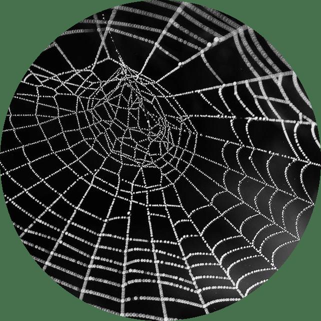 Dedetização de Aranhas - Rio de Janeiro