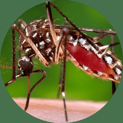 Dedetização de Mosquitos no Rio de Janeiro