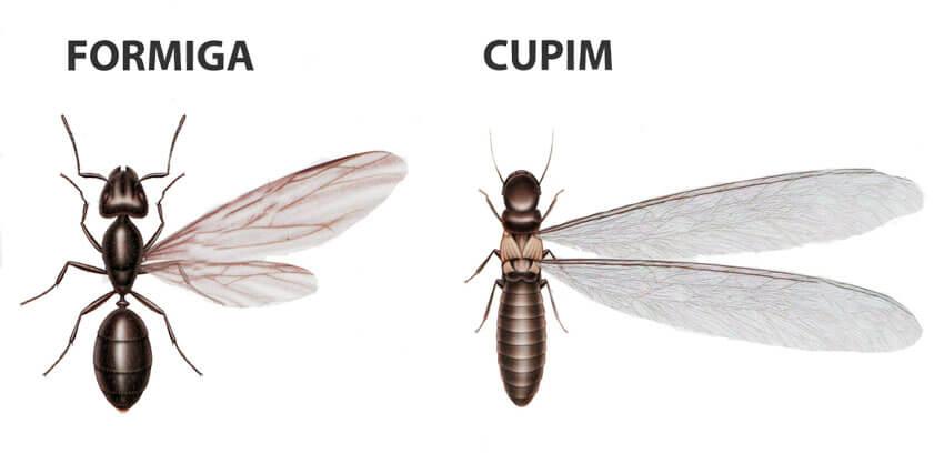 diferenças cupim e formiga