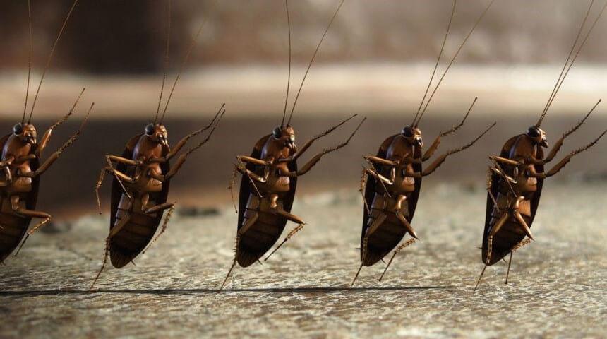 Dedetização de baratas em Macaé
