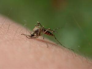 controle de mosquitos