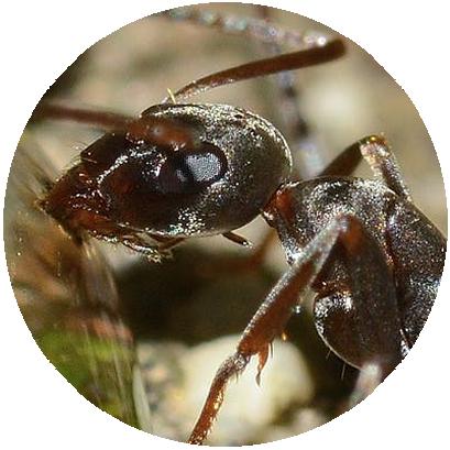 Empresa de Dedetização de Formigas RJ
