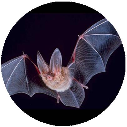 Manejo de Morcegos no Rio de Janeiro