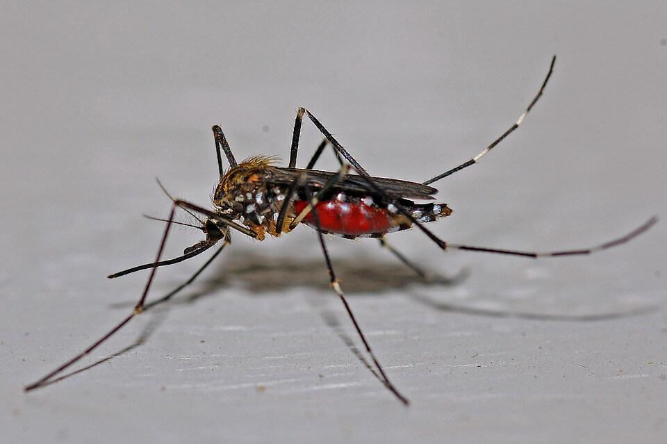 Escolha a empresa ideal para o controle de mosquitos