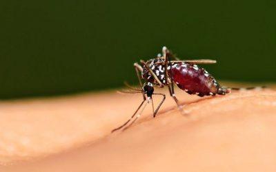 Limpeza de caixa d'água periódica evita proliferação da dengue