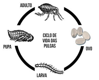 Ciclo de vidas das pulgas