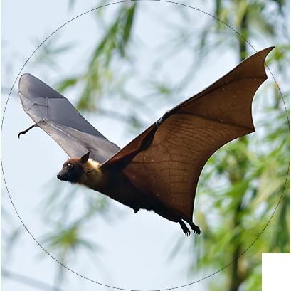 Sobre os Morcegos - Manejo de Morcegos no Rio de Janeiro