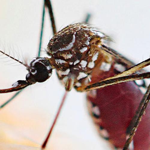 Dedetização de mosquitos: saiba por que o serviço é mais intenso no verão