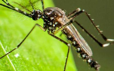 Como realizar a manutenção da sua residência ou empresa após a dedetização de mosquitos