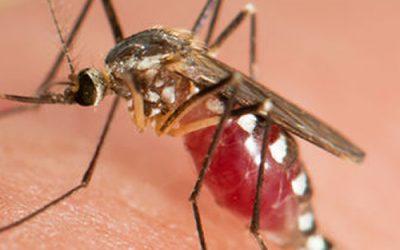 Dedetização de mosquitos: Conheça os métodos mais eficientes