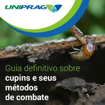 Guia Definitivo Sobre Cupins e Seus Métodos de Combate