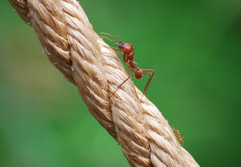 dedetização de formigas rj