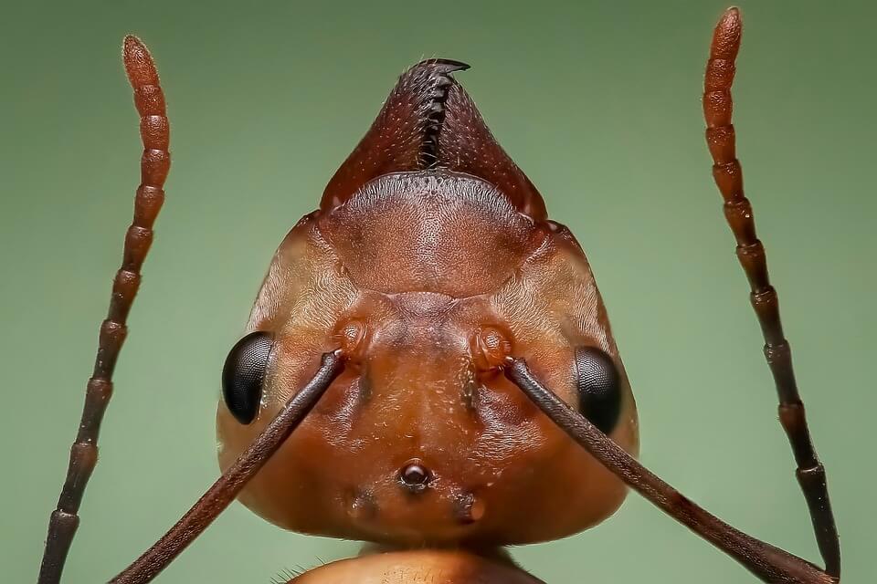 Qual é o Preço da Dedetização de formigas?