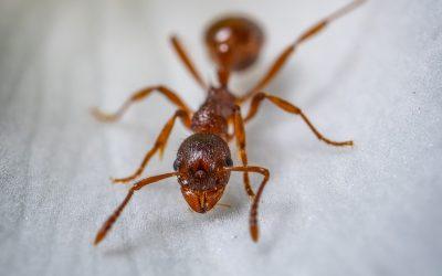 A eficiência das formigas está relacionada com o seu ócio, revela estudo