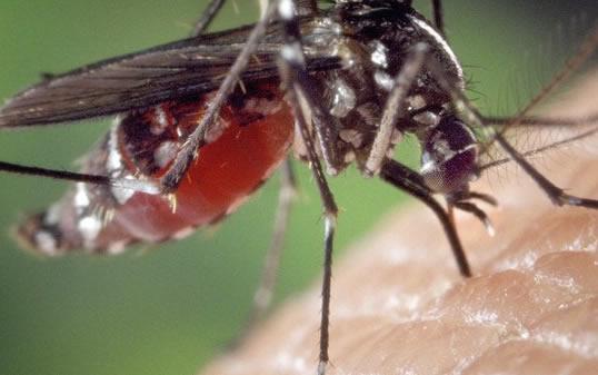 Dedetização de Mosquitos pode Salvar a Sua Vida!