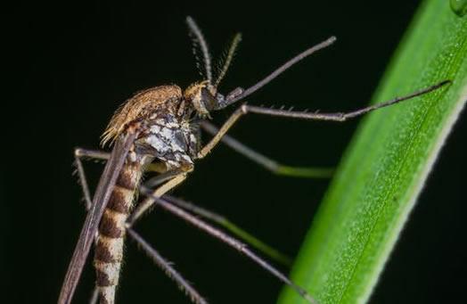 Dedetização de Mosquitos Eficiente? Chame a Imuni Service Uniprag!