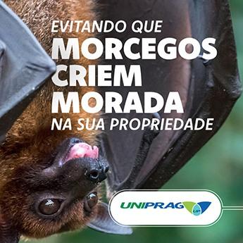 Evitando que Morcegos criem morada na sua propriedade