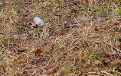 Problemas provocados pelas pragas urbanas pela ausência de dedetização de terrenos
