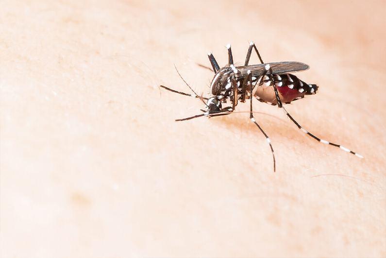 O vírus Mayaro, transmitido pelo mosquito Haemagogus, já circula no Rio de Janeiro