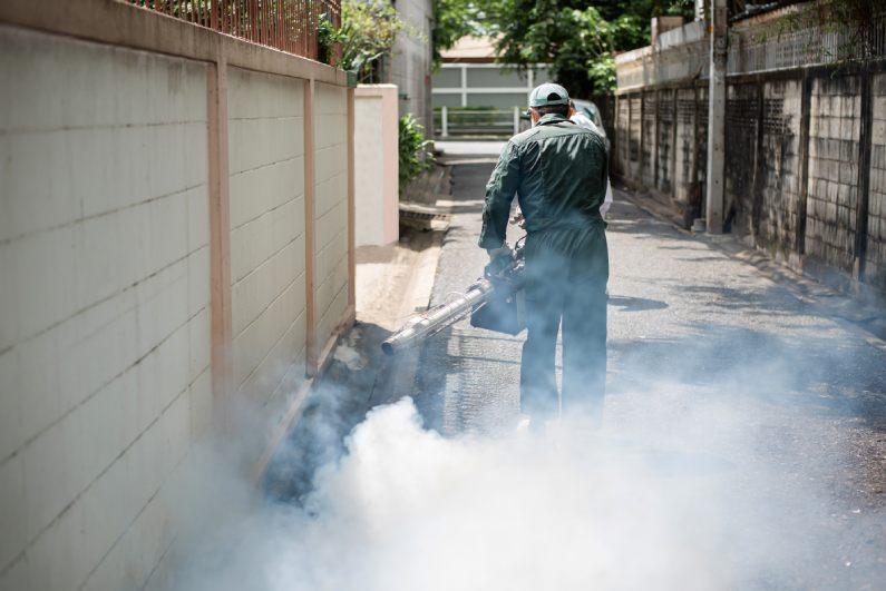 Dedetizadora no Rio de Janeiro: conheça os serviços disponíveis