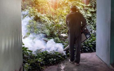 Dedetizadora no Rio de Janeiro protege contra doenças provocadas pelas pragas urbanas