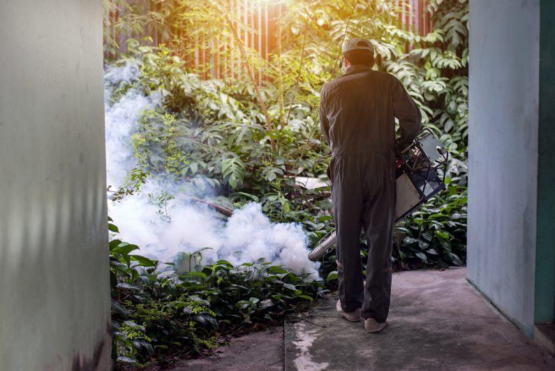 Dedetizadora no Rio de Janeiro protege contra doenças provocadas pelas pragas urbanas | Uniprag Rio