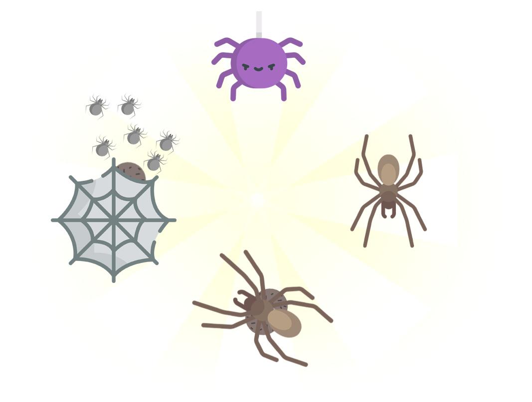 Ciclo de vida das aranhas - Dedetização de Aranhas