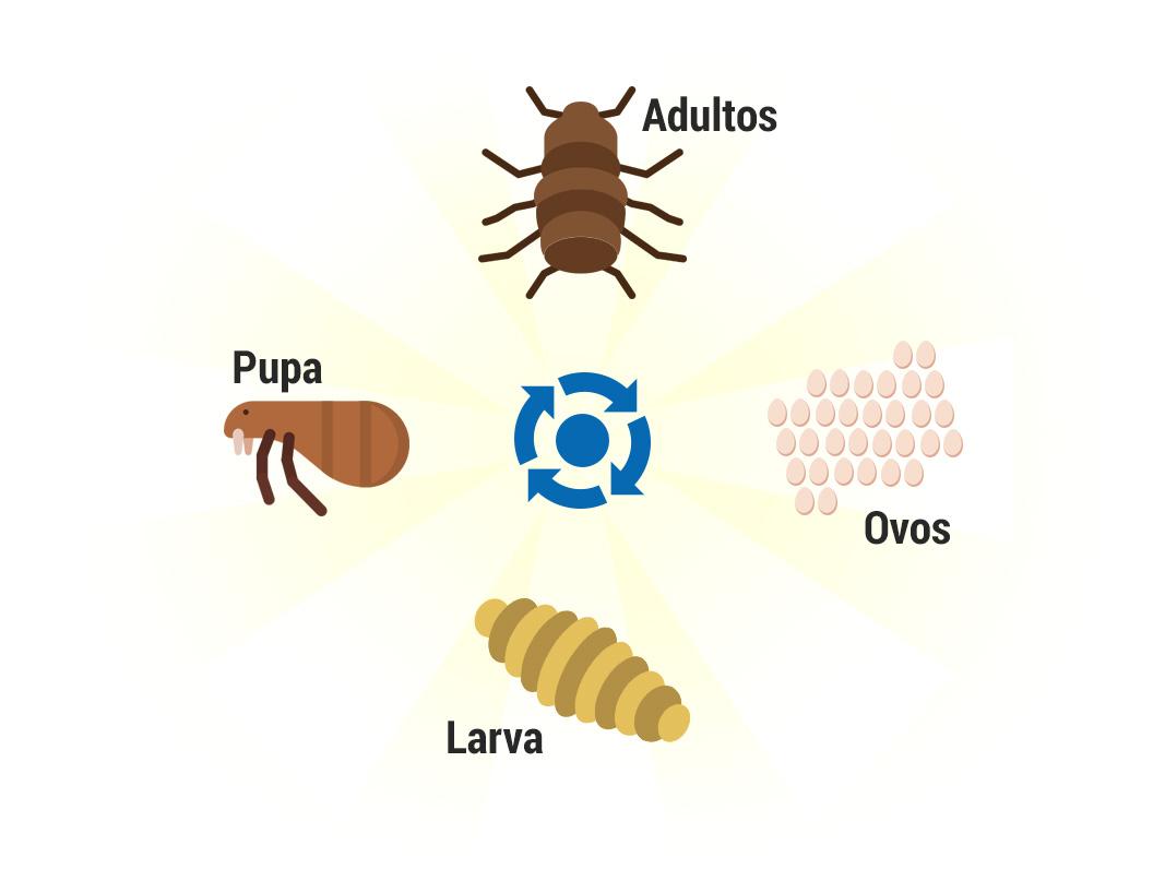 Ciclo de vidas das pulgas - Dedetização de Pulgas