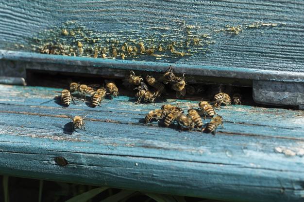 Dedetização de abelhas
