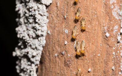 Cupins: problemas causados por estes insetos